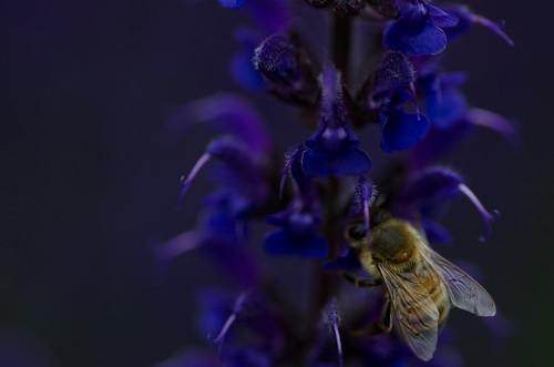 How we get the honey? ©  Still ePsiLoN