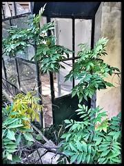 Porte secrte....secret door (laurent Showl20) Tags: vert nature porte door verte green arbre abandoned decay rusty
