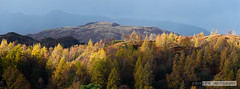 Autumn Panoramic (John Fn Photography) Tags: 70200 70200mmf28 autumn britain cumbria d810 europe england fall greatbritain lakedistrict nikkor nikon nikon70200mm nikonfx orange pano panoramic seasons tarnhows trees uk unitedkingdom alps cloud crag darksky elevation foothills forest hill landscape mountain outdoor panorama peak range ridge storm sunlight southlakelanddistrict gb