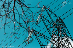 3 Phase Branches (Oliver Wood Photography) Tags: powerlines pylon middlewoodway