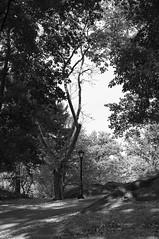 X100-09-12-15-402-2 (a.cadore) Tags: fujifilmx100 fujifilm x100 nosort 23mm35mmequivalent newyorkcity nyc uptown uws blackandwhite bw landscape