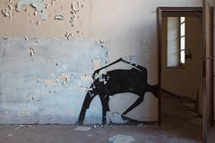 haveALook (FoKus!) Tags: urbex italie italy abandon left decay sanatorium manicomio di c lost europe ue eu abbandonata abandonned abandonné urban explo exploration ngc