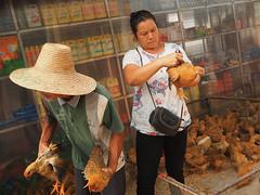 choosing hens copy (anwoody) Tags: xingping streetlife