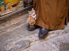 Cats of Fs (Georgie Pauwels) Tags: cats shoes street candid olympus streetphotography