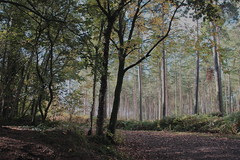 Pathway (Cal Killikelly) Tags: forest path autumn delamere october outdoor serene tree wood fall green eden flickr cal killikelly nature wildlife ferns leaves north west frodsham uk canopy pastel