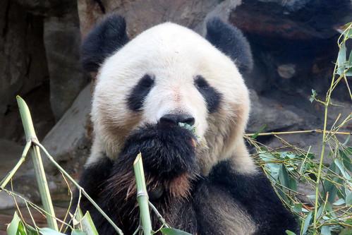 Thumbnail from Beijing Zoo