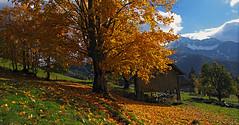 Strugarje01 (Vid Pogacnik) Tags: austria karavanke karawanken mountains outdoor landscape hiking autumn foliage farm mountain alps
