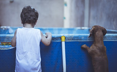 Cómplices. (Pablin79) Tags: portrait boy people light outdoor dachshund dog pool animal cute child colors fun play kid pet childhood baby daylight argentina vicente teckel misiones dackel vini posadas django