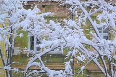 DSC_7128 (veluly) Tags: snow sofia roofs