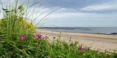 Northumberland July 2012 (geoff.murphy65) Tags: holiday2012 northumbria