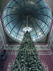 It's about time of the year #xmas #xmastree #qvb #qvbsydney #townhall (SYPK) Tags: xmas xmastree qvb qvbsydney townhall