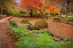 The Autumn Grotto || EVERGLADES GARDENS || LEURA (rhyspope) Tags: australia aussie nsw new south wales blue mountains leura everglades autumn fall garden fern free tree color colour foliage rhys pope rhyspope canon 5d mkii creek stream