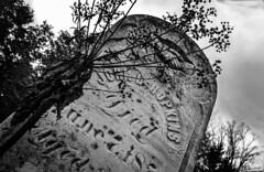 Killing Frost (drei88) Tags: grim death bleak stark grave cloudy dreary alone windswept cold nelsontownship d7000 d7k grit somber muted dark disturbing charged halloween bw raven nevermore edgarallanpoe