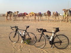 Bikes at Camel Racetrack, Remah, UAE (Patrissimo2017) Tags: bicycles cycling camels