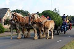 The Flaeijel parade 2016 (Davydutchy) Tags: flaeijelfeest flaeijel festival feest dorpsfeest nijhoarne nieuwehorne âldhoarne oudehorne fryslân friesland frisia frise nederland netherlands niederlande paysbas holland country life platteland boer farmer bauer fermier paysan agricultural community hynder horse paard pferd konj hest ĉevalo കുതിര caballo лошадь kůň fries friesian frisian