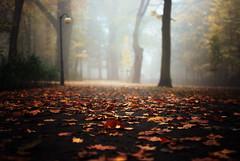 pool of light (ewitsoe) Tags: autumn ewitsoe nikond80 35mm street park solacki forest leaves light fog foggy mist