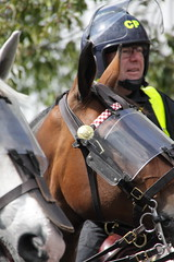 Mounted Police pre match crowd control (Ian Press Photography) Tags: ipswich town football club portman road suffolk norwiich city fc 999 police emergency service services match old farm derby championship norfolk horse horses mounted pre crowd control london colp