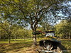 Noix de Grenoble (HITSCHKO) Tags: noixdegrenoble echtewalnuss juglansregia laubbaum walnussgewächse juglandaceae walnuss walnussbaum baumnuss nutzpflanze nutzholz isère drôme savoie france frankreich