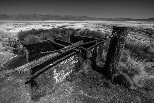 Desert oasis – monochrome