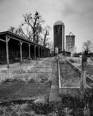What Remains #3 (Jeff Damron) Tags: farm bluegrass region woodford county kentucky blackandwhite