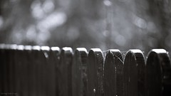 Fence 2 (Zsofia Nagy) Tags: 7daysofshooting week20 repetition shootanythingsaturday flickrlounge weeklytheme 55200mmf456 fence focus repetitive blackwhite blackandwhite bw d3100 depthoffield dof