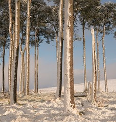 The Sunnyside (.Brian Kerr Photography.) Tags: winter cold snow landscapephotography scotland southlanarkshire elvanfoot scotspines trees briankerrphotography briankerrphoto