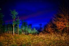 Time for christmas tree (dannygreyton) Tags: christmas tree fir forest wood christmastime xmas longexposure sweden sky
