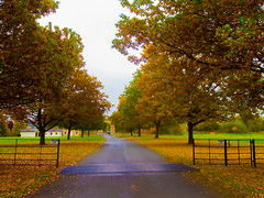 Walking through the Path of Trees (RS400) Tags: trees cool wow amazing uk england landscape autumn leaves path road grass olympus photo weather