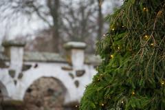 Christmas tree (Maria Eklind) Tags: bosjkloster castle julmarkand slott christmastree hr bosjklosterslott bokeh christmas sweden december skneln sverige se
