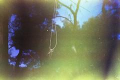 hanging (the.crystalimage) Tags: film filmphotography filmphoto filmcamera filmfeed filmlove filmisnotdead analogphotography analog ishootfilm analogue analoguephotography filmcommunity filmproject grain grainisgood 35mm 35mmfilm expiredfilm pentaxmesuper prinzgalaxy35mmf35 expired