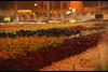 صوره للمبدع / Fasȏȏ (fraise-d.com) Tags: سويت سيارتي الصباح الرياض مطر الامل دخان ابداع قهوة بيبي قطوه همي بلاك حزني شاهي خيوط احترافيه راكان بيري