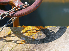 Chained (WHO 2003) Tags: rusty lichen chained lymington
