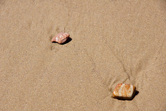 2012-04-06 04-08 Big Sur 036 Oceano, Pismo Dunes Natural Preserve