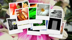 collage (stuffstuffstuffstuff) Tags: flowers nature colors animals collage tiere mixed natur blumen farben gemischt