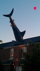 Headington Shark, first appeared on 9 August 1986 (Sonny Hermawan) Tags: uk england home shark unique oxford headington