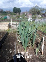 Plot 12A - Leeks in half bed 26-04-2013 (Davy1000) Tags: carrots leeks broadbeans onionsets earlypotatoes april2013 plot12a lettucelittlegem halfbed beetrootchioggia potatoesrocket