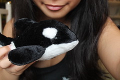 Killer cute (fos-ter) Tags: quality plushie killerwhale stuffie