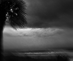 Stormy Morning (Nellie Vin) Tags: light sky blackandwhite storm tree art water weather waves shadows seasons contemporaryart fineart photograph impressionism fineartphotography nellievin palmweather