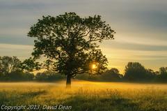 Morning Mist (jactoll) Tags: light mist tree landscape dawn nikon tranquil warwickshire alcester d7000 jactoll nikcolorefexpro4