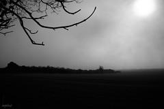 Sun Won (innpictime  ) Tags: sun mist field fog march ridge hedge winterwheat