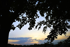 AWAKENING OF TREES (DESPITE STRAIGHT LINES) Tags: trees tree nature field grass leaves river landscape countryside kent nikon flickr day farm silhouettes foliage clear mothernature lullingstone d800 riverdarent eynsford paulwilliams silhouettesoftrees silhouettesofleaves nikon2470mm nikkor2470mm nikond800 eynsfordvillage despitestraightlines eynsfordkent theeynsfordviaduct lullingstonevillage sunriseovereynsford sunriseovertrees ilobsterit