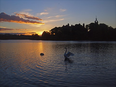 DANCE OF THE SWAN (kenny barker) Tags: landscape scotland swan linlithgow linlithgowpalace olympusep1 kennybarker