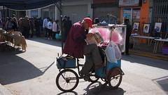 Algodonero (Isigrone) Tags: 300 anciano viejo diario algodonero