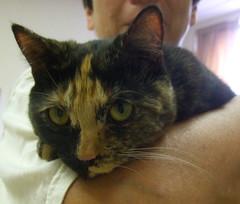Libby (Stylurus) Tags: yard cat liberty michigan property willow lodi