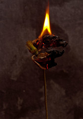 all burnt out (downhamdave) Tags: life abstract canon tile dead fire still clematis sigma burning burnt slate