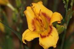 IMG_7473 (Flávio Cruvinel Brandão) Tags: flowers brazil naturaleza flores flower color macro nature colors brasília brasil cores colorful natureza flor fiori macros cor colorida coloridas