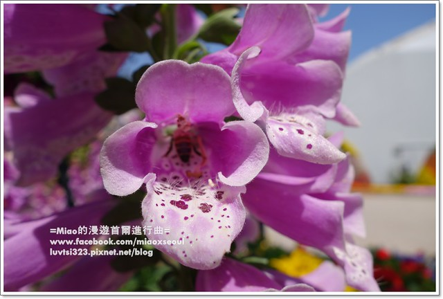고양국제꽃박람회011