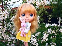 Enchanting aroma of apple tree flowers