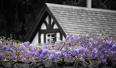Victorian Cottage 2 (gfacegrace) Tags: flower flowers garden gardenphotography love nature amazingnature beautiful pretty flowerphotography macro tuparegardens naturephotography colourful amazing botanical gardens artistic canon tree growth spring wisteria purple gateway gardengate door doorway fantasy old roof magical cottage victorian victorianhouse house home blackandwhite fairytale