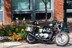 Triumph Thruxton (tacosnachosburritos) Tags: aspen colorado co thestreets street photography man guy boy girl woman chick lady town rocky mountain high elevation wealthy rich resort